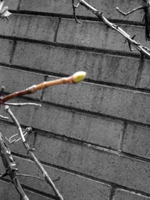 Spring_branch