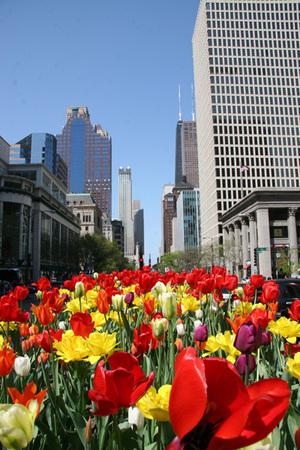 Tulipdaysweb